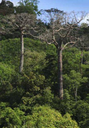 Bosques de Chucanti Darien